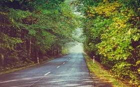 Картинка лес, солнце, листва, листья, тени, деревья, дорога