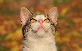 Обои кошка, глаза, вверх, размытость, смотрит