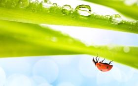 Обои насекомое, божья коровка, вода, трава
