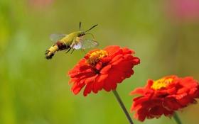 Картинка цветок, лето, природа, шмель