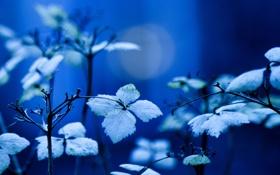 Картинка листья, ветки, синий, фон, растение, освещение