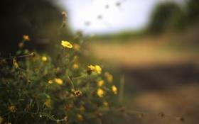 Обои цветок, природа, фокус
