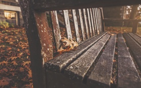 Обои осень, листья, скамейка, город, лист, парк, листва