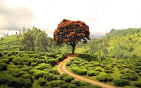 Обои дорога, зелень, лето, деревья, пейзаж, природа, поля