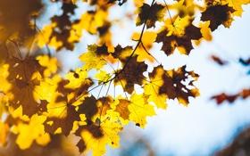 Картинка осень, листья, макро, ветки, дерево, размытость