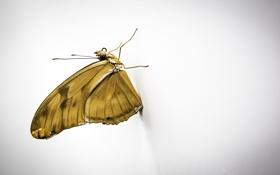 Обои бабочка, крылья, насекомое, мотылек
