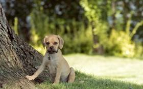 Картинка лето, природа, собака