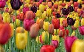 Картинка поле, краски, лепестки, сад, луг, тюльпаны