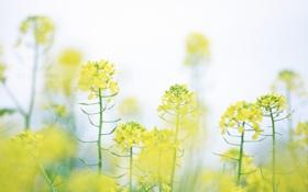 Картинка макро, цветы, природа, легкость, цвет, растения, весна