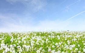 Обои трава, небо, природа, пейзажи, поля, цветы