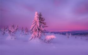 Обои зима, лес, снег, закат, природа
