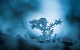 Картинка холод, лед, зима, макро, снег, синий