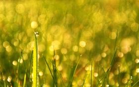 Обои капли, bokeh, трава