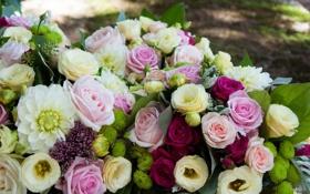 Картинка цветы, фото, розы, много, эустома, георгины