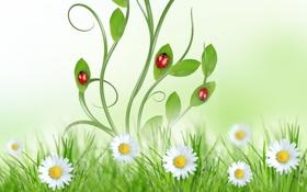 Обои небо, трава, листья, цветы, green, божья коровка, ромашки