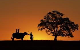 Обои закат, поле, силуэт, дети, буйвол, мужчины, дерево