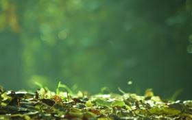 Обои фон, трава, земля, макро, зелеь