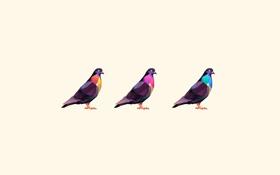 Обои птицы, голуби, три, окрас, цветной, белый фон