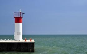 Картинка море, пейзаж, птицы, маяк
