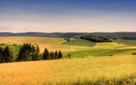 Картинка поле, лес, лето, небо, трава, пейзаж, тепло