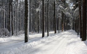 Обои road, trees, winter, snow