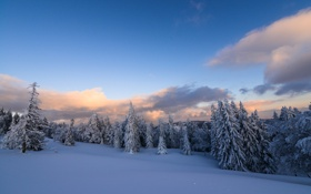 Обои зима, лес, снег, деревья, природа, елки