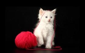 Обои кот, клубок, котёнок, нитки