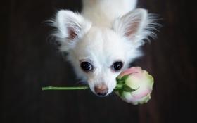 Обои цветок, взгляд, друг, собака