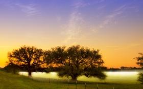Обои поле, деревья, природа, туман, утро