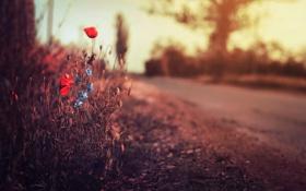 Картинка дорога, трава, цветы