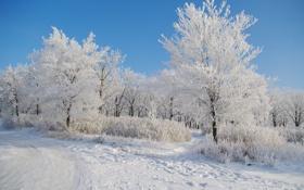 Картинка снег, Зима, утро