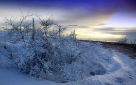 Обои зима, дорога, снег, закат, забор, куст