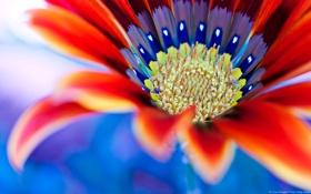 Обои макро, Цветок, flower, die Blume
