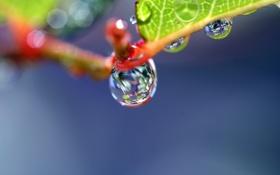 Обои вода, макро, лист, роса, блики, капля