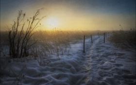Картинка пейзаж, поле, снег, утро