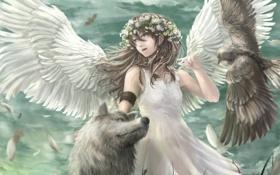 Обои птица, волк, крылья, ангел, аниме