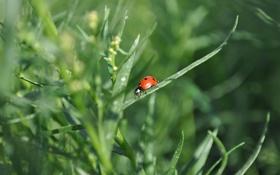Обои лето, насекомые, Природа