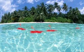 Обои вода, пальмы, цветы