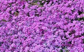 Обои природа, Цветы, растения
