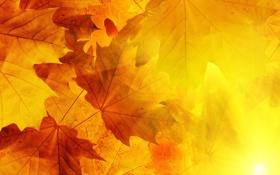 Обои листья, осень, солнце, прожилки