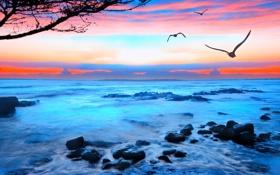 Картинка море, волны, небо, пена, закат, птицы, камни
