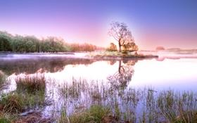 Картинка лес, небо, трава, вода, солнце, деревья, пейзаж