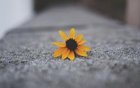 Картинка желтые, цветок, лепестки