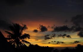 Обои закат, солнца, пейзаж. вечер, природа, пальмы