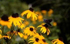 Обои цветы, бабочка, желтые, лепестки