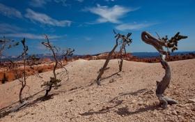Картинка песок, небо, облака, деревья, природа, пустыня, коряги
