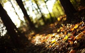 Обои осень, лес, трава, листья, свет, деревья, природа