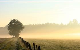 Картинка дорога, поле, трава, деревья, туман, роса, забор