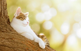 Картинка кошка, животные, кот, природа, дерево