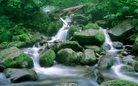 Картинка лес, вода, природа, ручей, камни, дерево, водопад